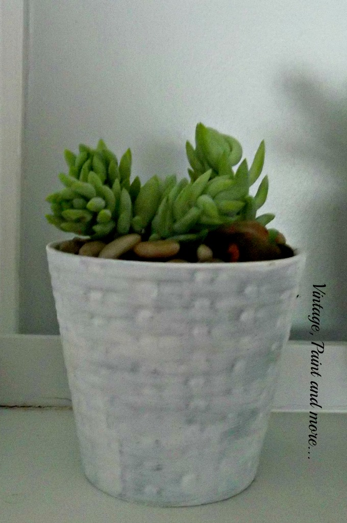 Succulents in Upcycled Dollar Store Pots - succulent gardening, light green succulents, decorating with succulents, using succulents in the home