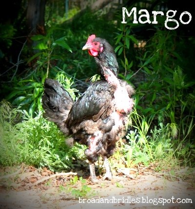 Margo the Naked Chicken
