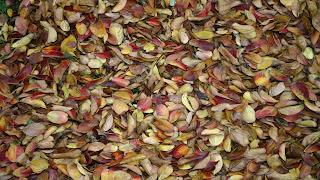 Texturas folhas