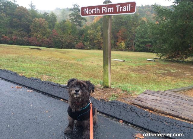 Oz the Terrier at trailhead of North Rim Trail in Tallulah Gorge State Park, Georgia