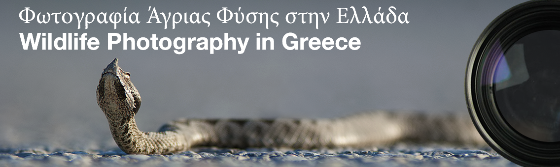 Wildlife Photography in Greece