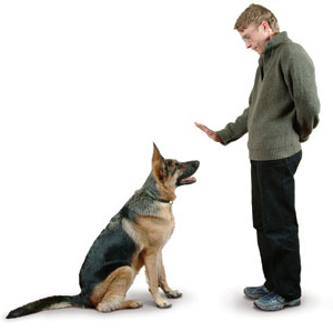 photo of What you need to know to train your dog - Cesar Millan's Pros and Cons