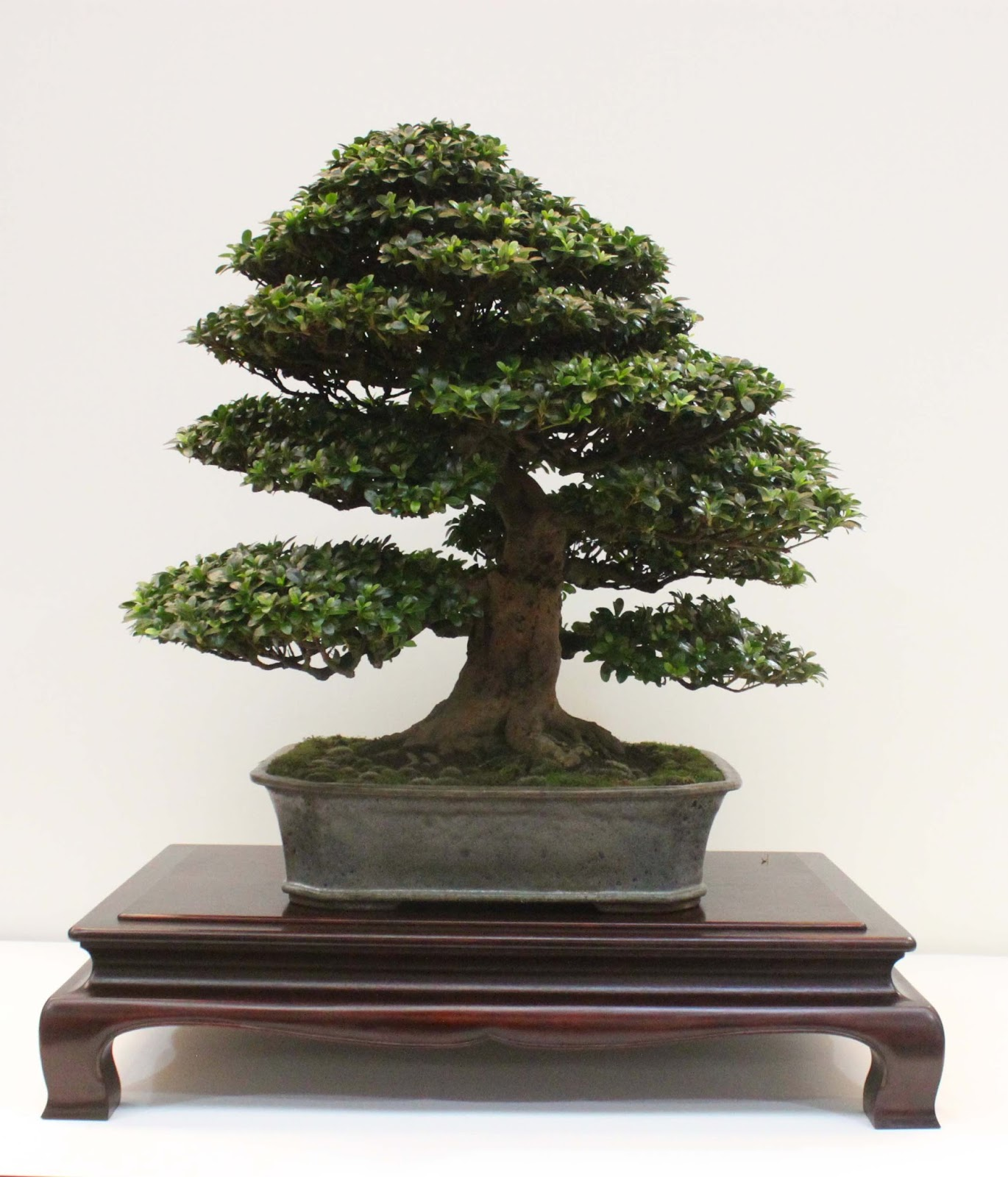 Yamadori Art UK