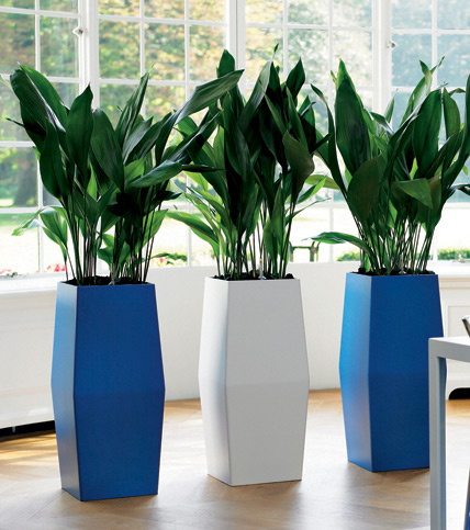 Placed In Indoor Plant Pots Add The Natural Beauty Of Any