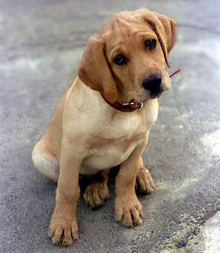 imágenes tiernos de perritos