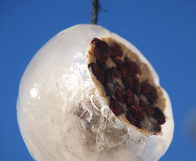 Iskugle med fuglemad ophængt i haven