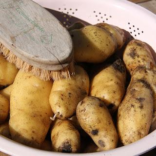 køkkenhaven, kartofler