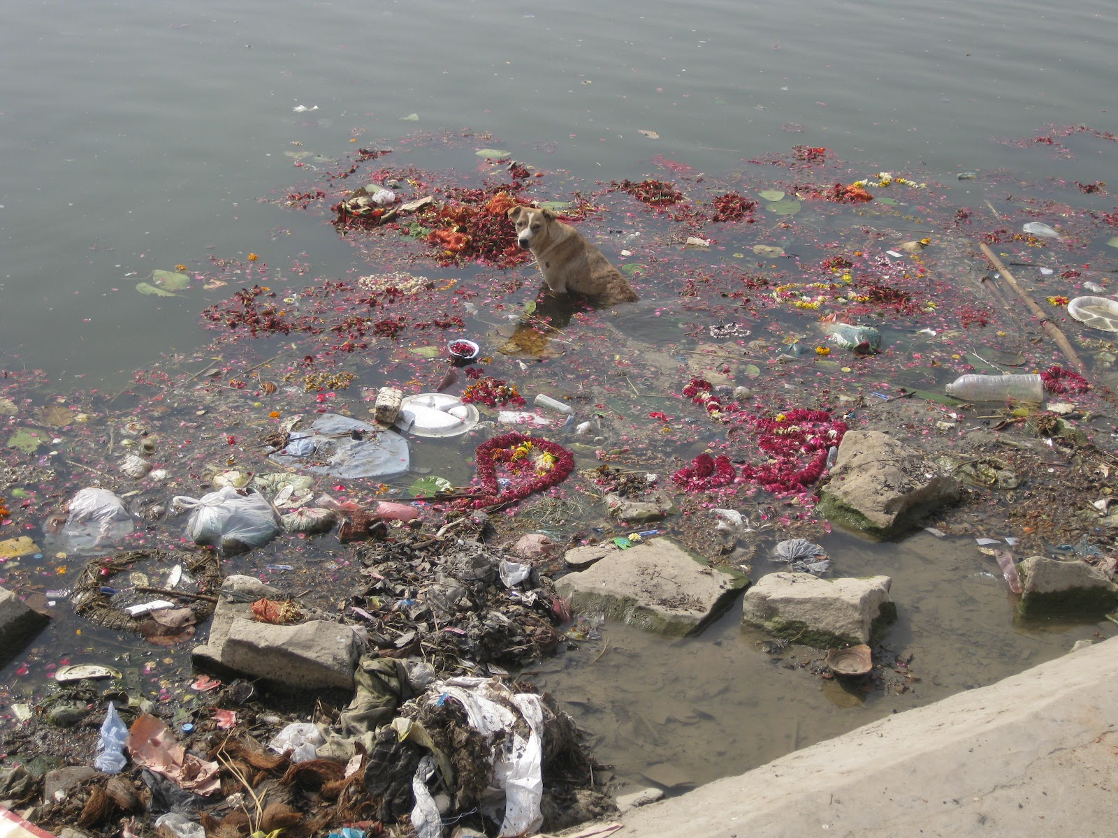 ganges river pollution essay View this essay on pollution on the ganges ganges is the sacred river of india and this country's history and traditions are closely linked to it it is important.