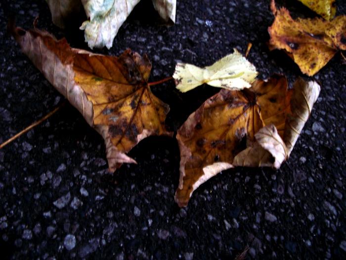 Spadające liście, zawahania i tenisówki