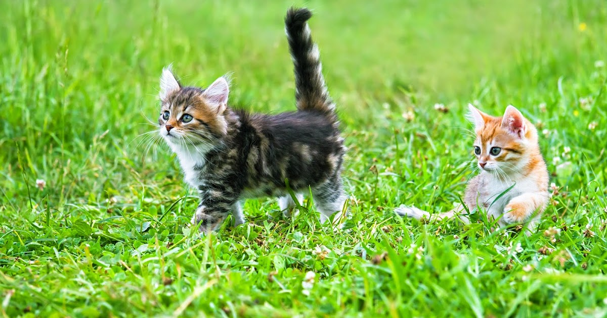 Why Do Cats Eat Grass To Make Themselves Sick