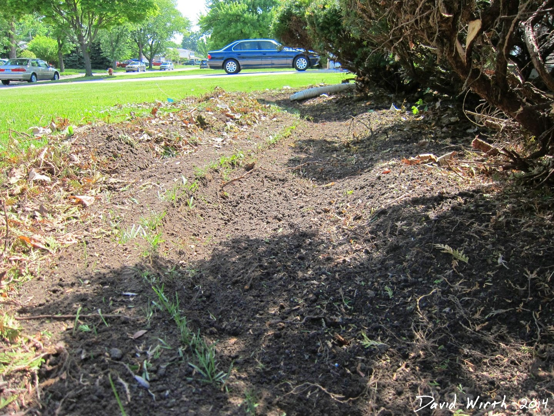 how to improve bushes, shrubs