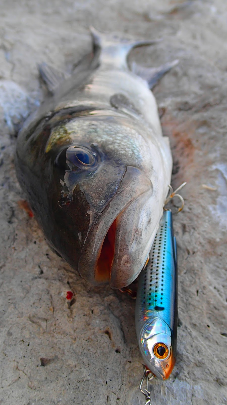 Lure and light game top water bassing for Water dogs fish