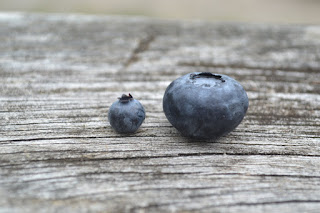 Blueberry extract could help fight gum disease