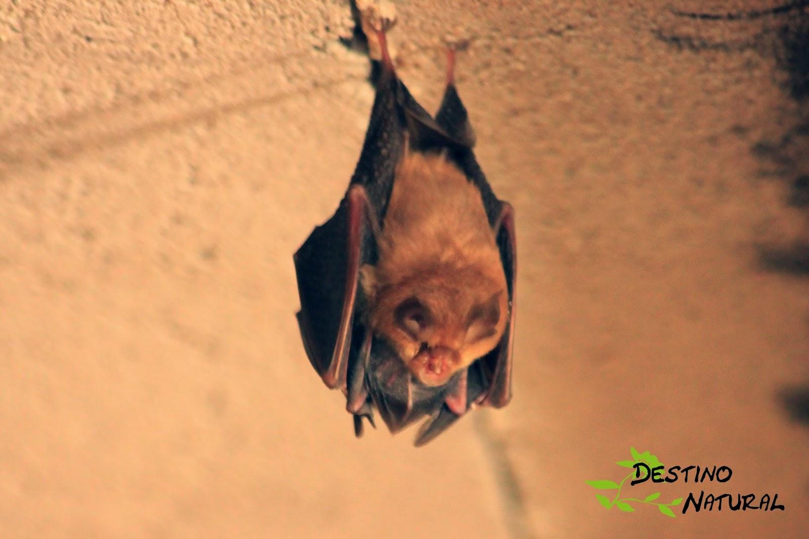 Murciélago en la Refugio de la Serpiente
