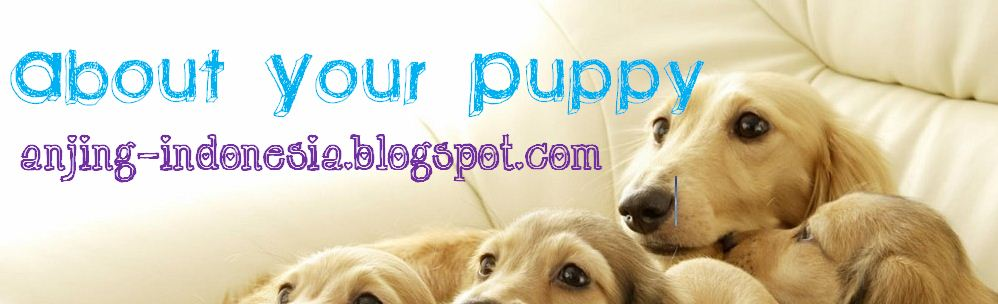 About Your Puppy