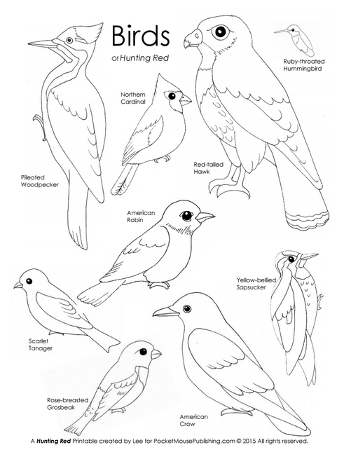 Birds of Hunting Red printable coloring page