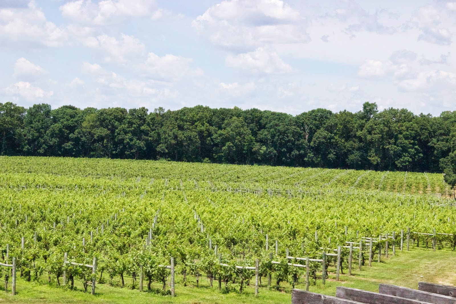 New Jersey Wineries - Laurita
