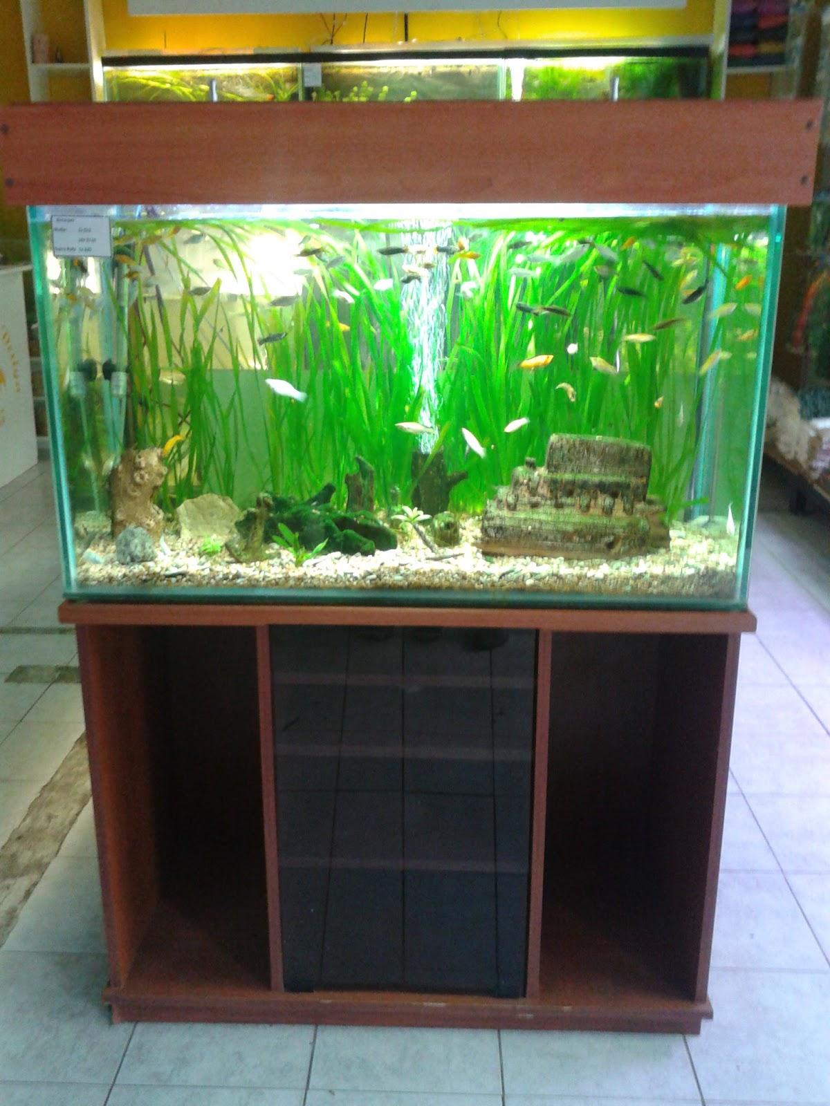 Acuarios decorpez iluminadores para acuarios tapas de for Acuarios a medida