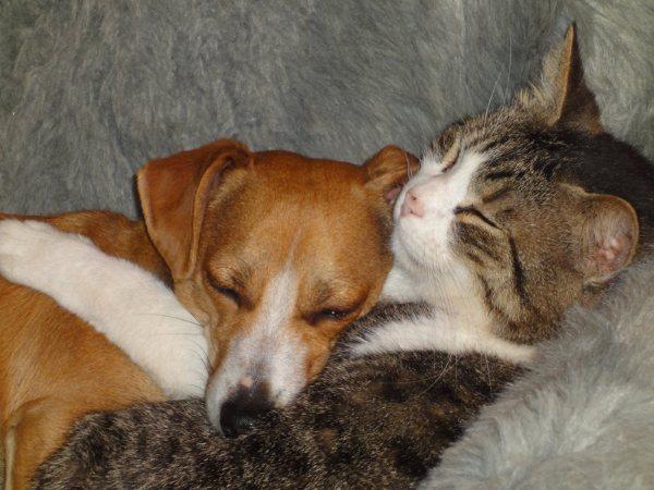 ¡¡mis amigos animales!!