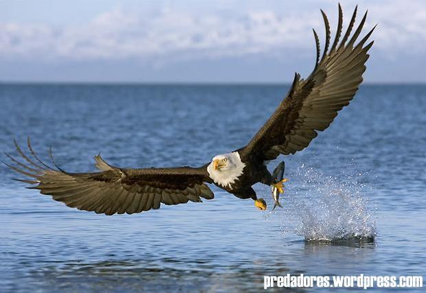 Ousar e voar sou uma guia for Fish and wings near me