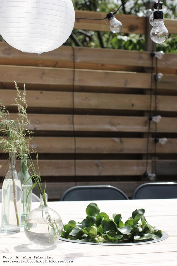trädäck, uteplats, vattenväxt, vattenväxter, växt, växter, vatten, vattenhyacint, vattenhyacinter, blommor, grönt, utemöbler, altan, inredning, inredningsblogg, blogg, webbutik, webbutiker, webshop, ljusslinga, ljusslingor, belysning, bord, trädäcket, altanen