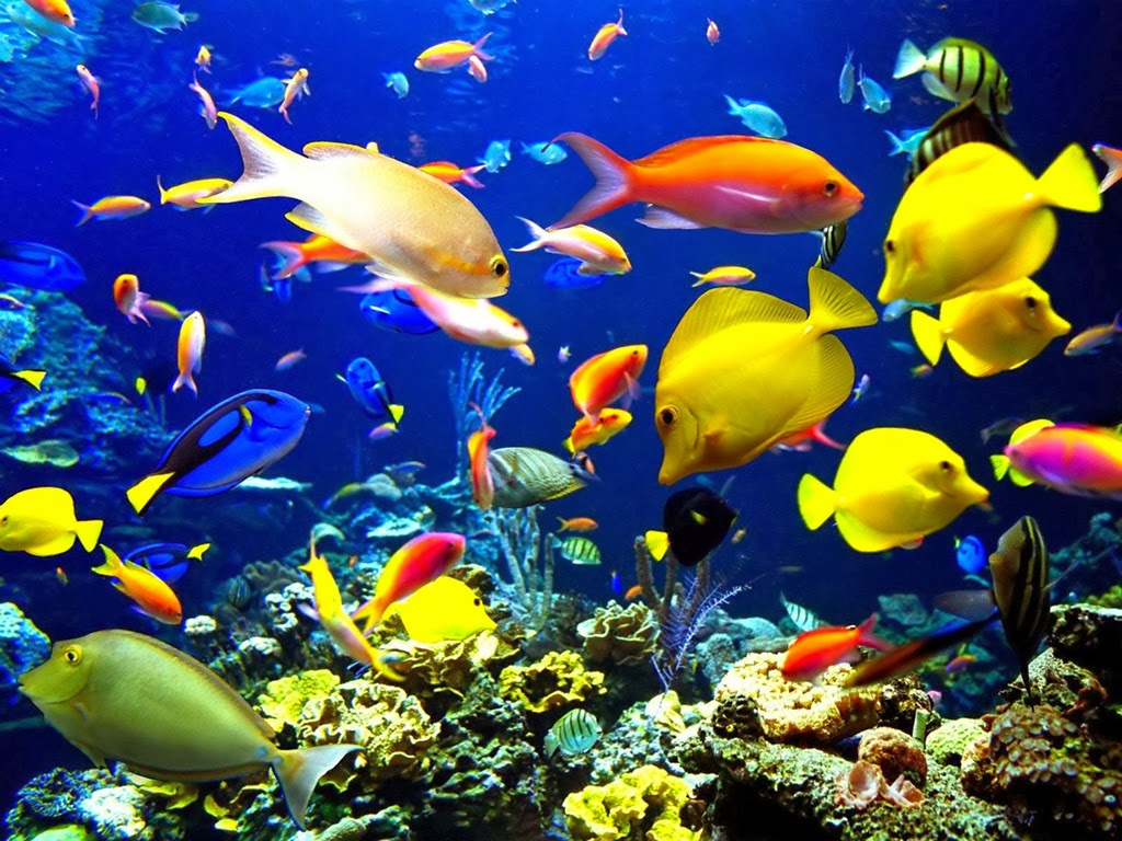 The bluest ice coral reefs why they are wonderful and for All the fish in the sea