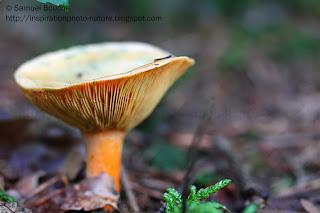 photo macro champignon