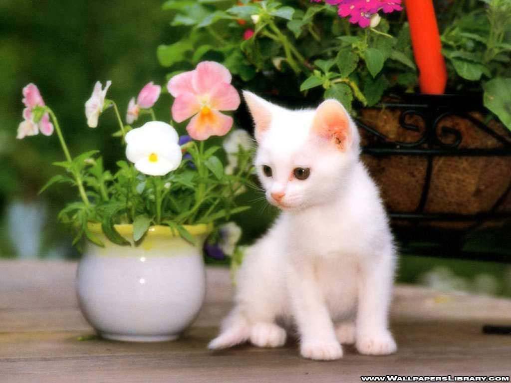 http://2.bp.blogspot.com/-vUDP8fkTMVE/UAwDrqqIASI/AAAAAAAAEck/RwLMh8M-y1Q/s1600/cat-and-flowers-wallpaper.jpg