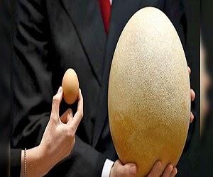 Telur terbesar didunia