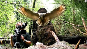 Uhu im Anflug: Robin Jähne an der Kamera