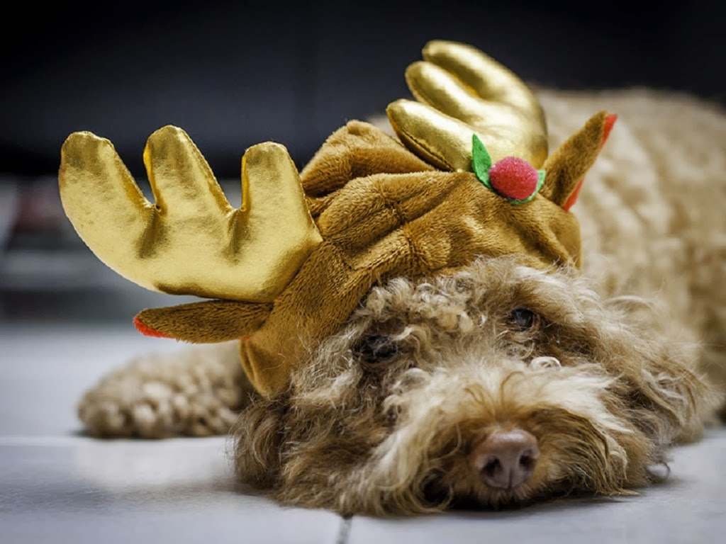 "<img src=""http://2.bp.blogspot.com/-vUgQpSqGnTI/UtqdBPTcFUI/AAAAAAAAI0M/La4-QMqn9Lg/s1600/christmas-dog.jpeg"" alt=""christmas dog"" />"