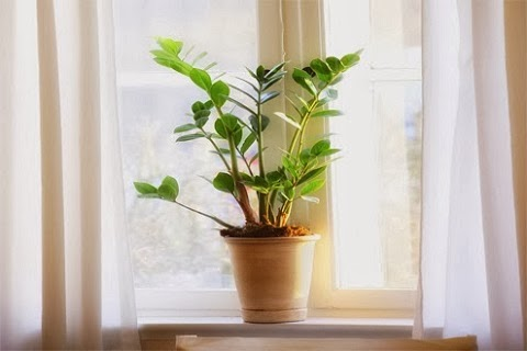 現成窗簾|即為固定尺寸窗簾,受限於安裝技術不普及,台灣較少人使用