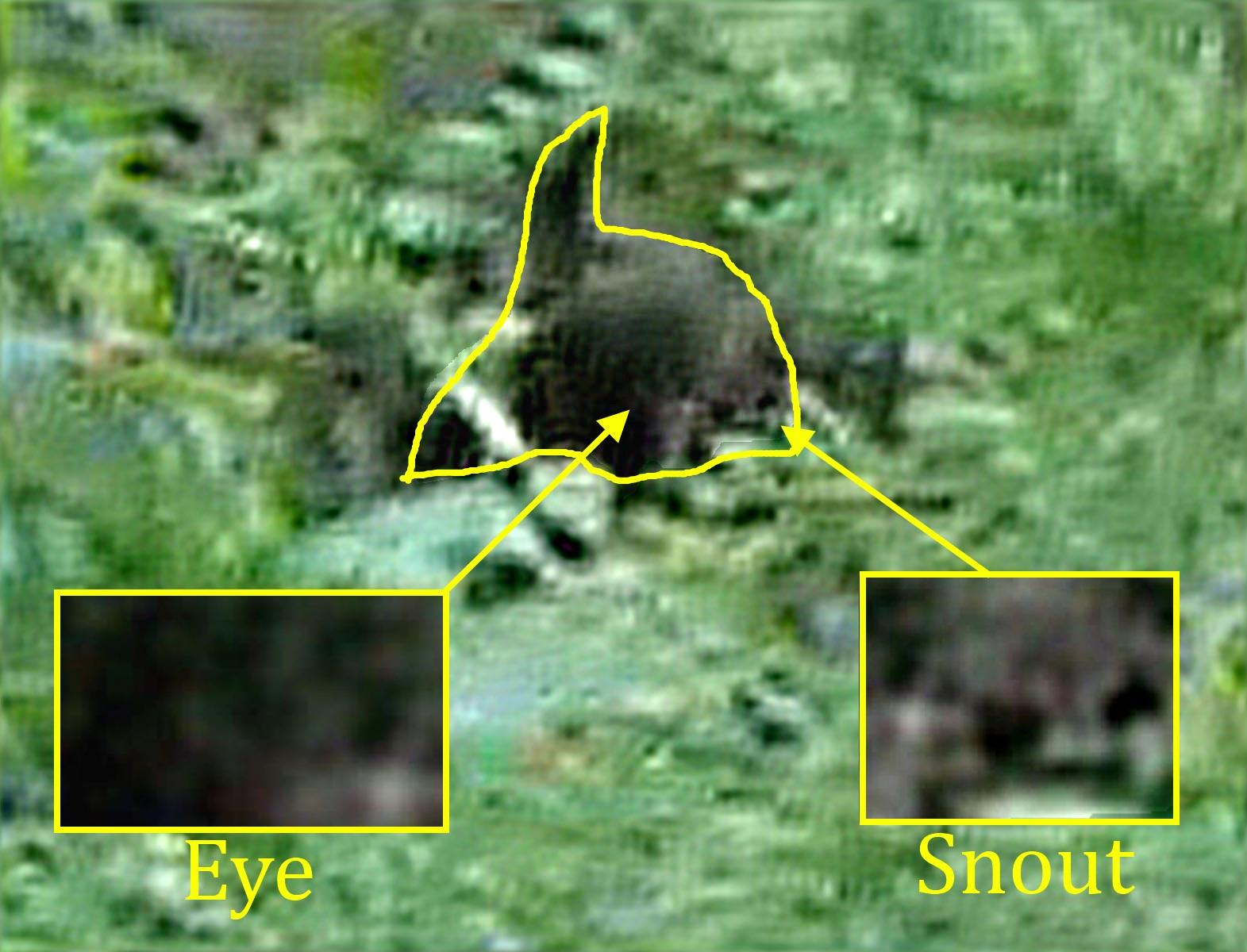 Real Werewolf Sightings | www.pixshark.com - Images ...