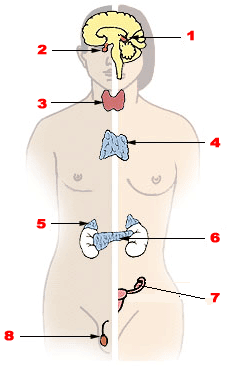 generic viagra cvs