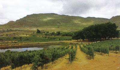 Widok na winnice w RPA