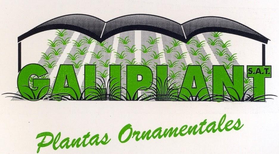 Vivero galiplant ornamental s l inicio for Viveros de plantas en vigo