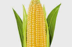 Porque el maíz ayuda a adelgazar