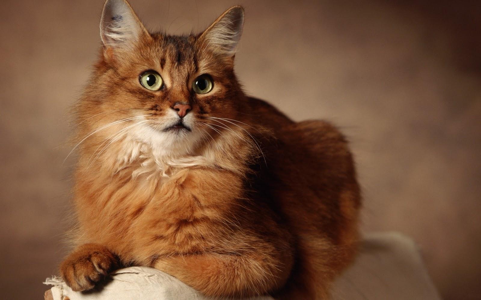 Stupid cat myths