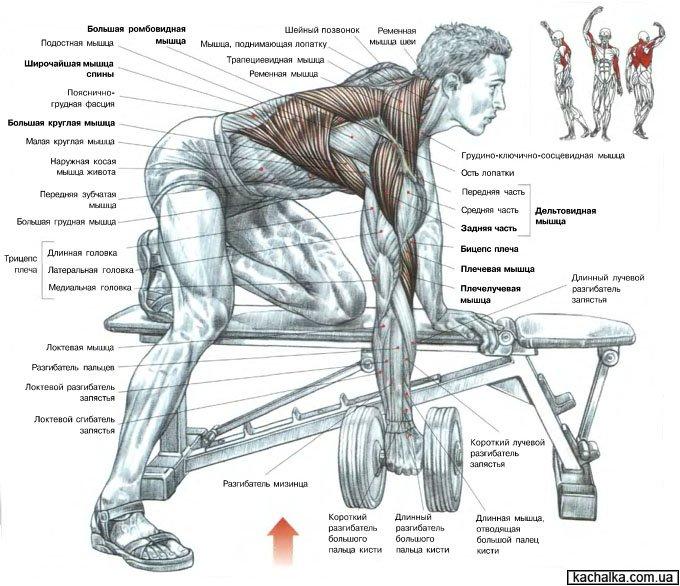 Как накачать мышцы тела в домашних условиях