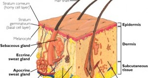 how to pass a hair test