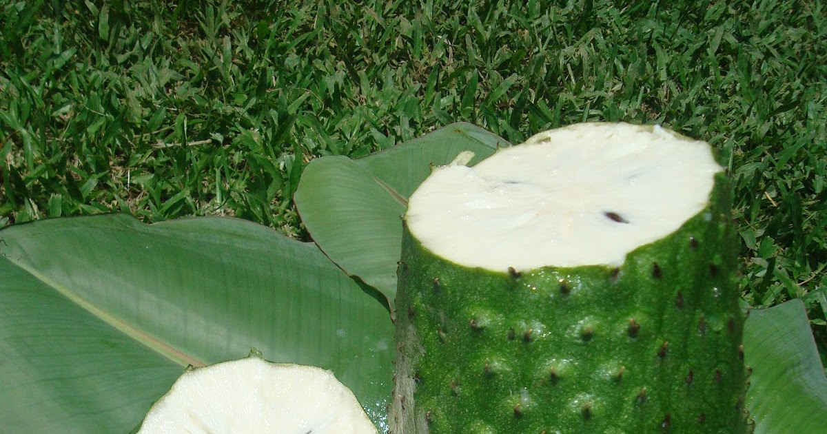 fruit water soursop fruit
