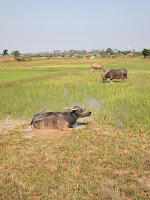 Paddy fields on Quad Adventure Cambodia