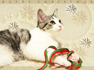 Gato deseando feliz navidad