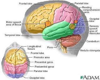 Gambar Otak