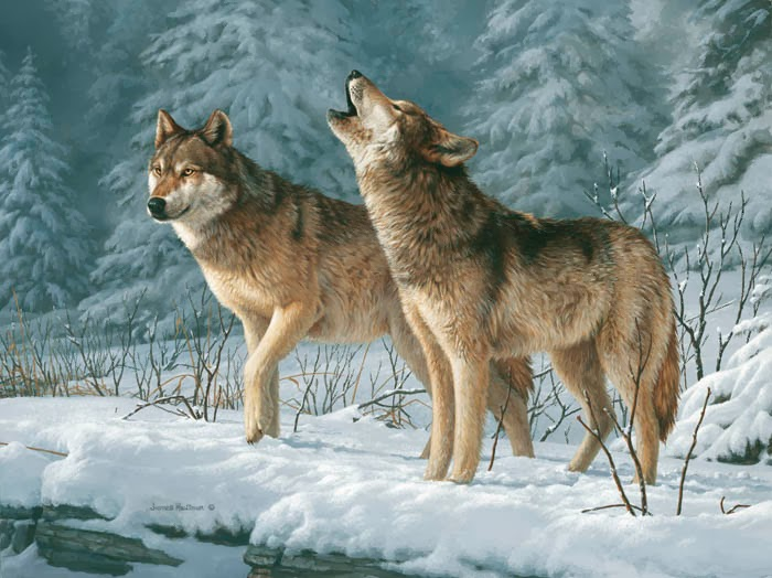 wolves calling