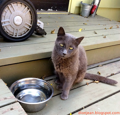 Beorn isn't a homeless cat. He has water dishes and brushes available.