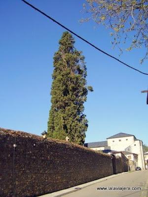 Cipres Anunciada Villafranca Bierzo Leon
