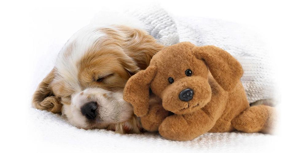 Chó Nhật, Chó Bắc Kinh, Chó Pug, Chó Poodle,.