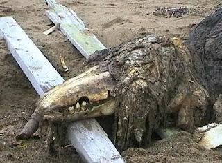 gambar haiwan aneh 2011,haiwan aneh dan pelik,haiwan misteri di dunia,haiwan ajaib,gambar makhluk asing,gambar pelik,haiwan yang aneh dan misteri,gambar pelik