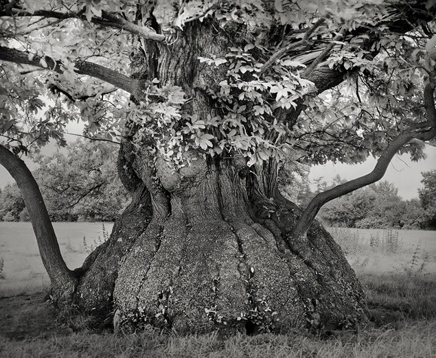 beth moon oldest living trees-6